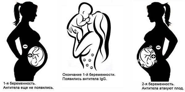 Схематическое изображение первой и второй беременности