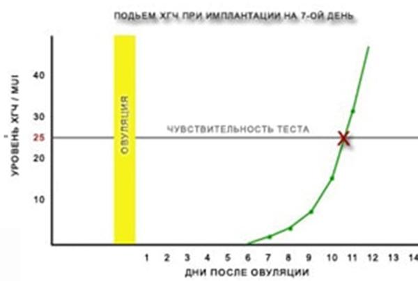 Как увеличивается ХГЧ
