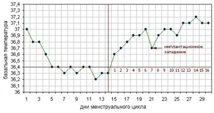 График изменения базальной температуры после зачатия