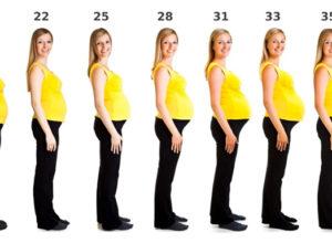 Развитие беременности наглядно
