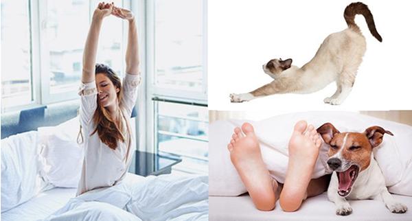 Потягивающаяся женщина, кошка и собака