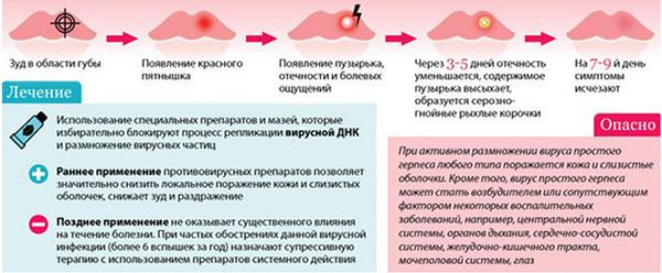 Информация о герпесе